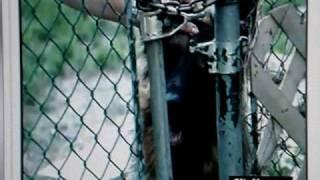 Toronto: Germanshepherd Attacks Other Dog