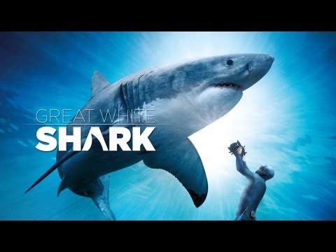 Great White Shark Official Trailer IMAX and Digital 3D