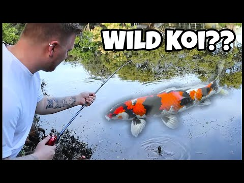 Fishing For PET Koi Fish In Tiny Local Pond!! (Surprising!)