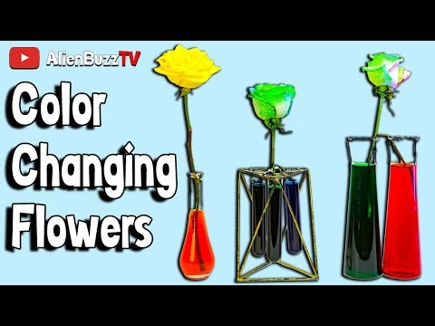 DIY RAINBOW ROSESColor Changing Flower Experiment! | Official AlienBuzzTV