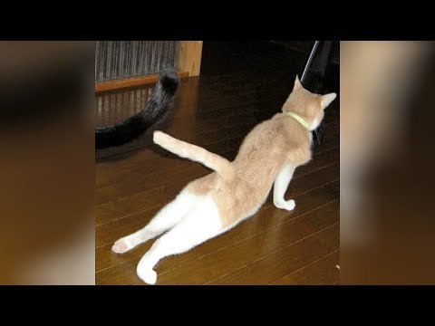 Are you ready for ULTRA LAUGHING? – CATS & DOGS doing HILARIOUS EXERCISES!