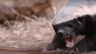 뱀을 먹은 동물들