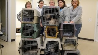 flushyoutube.com-Furkids Volunteers and Staff rescue 25 animals on New Year's Eve