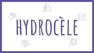 Sémiologie Urologique - Hydrocèle