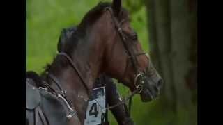 Jeux équestres mondiaux : la chute de Marc Todd lors de l'épreuve de cross