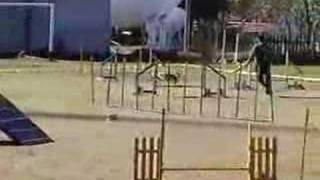 Dog Agility With Bandido