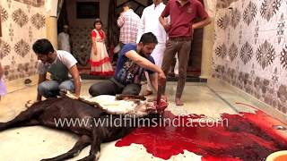 Ritual of Malik-e-Nisaab, sacrifice of domestic animals during Eid al-Adha