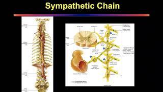 Dr. Richard Ellenbogen: About Chiari & Syringomyelia - Chiari & Syringomyelia Foundation.