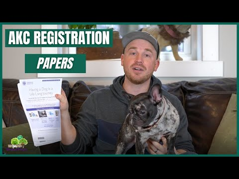 AKC Registration: It is important to have your frenchie AKC registered?