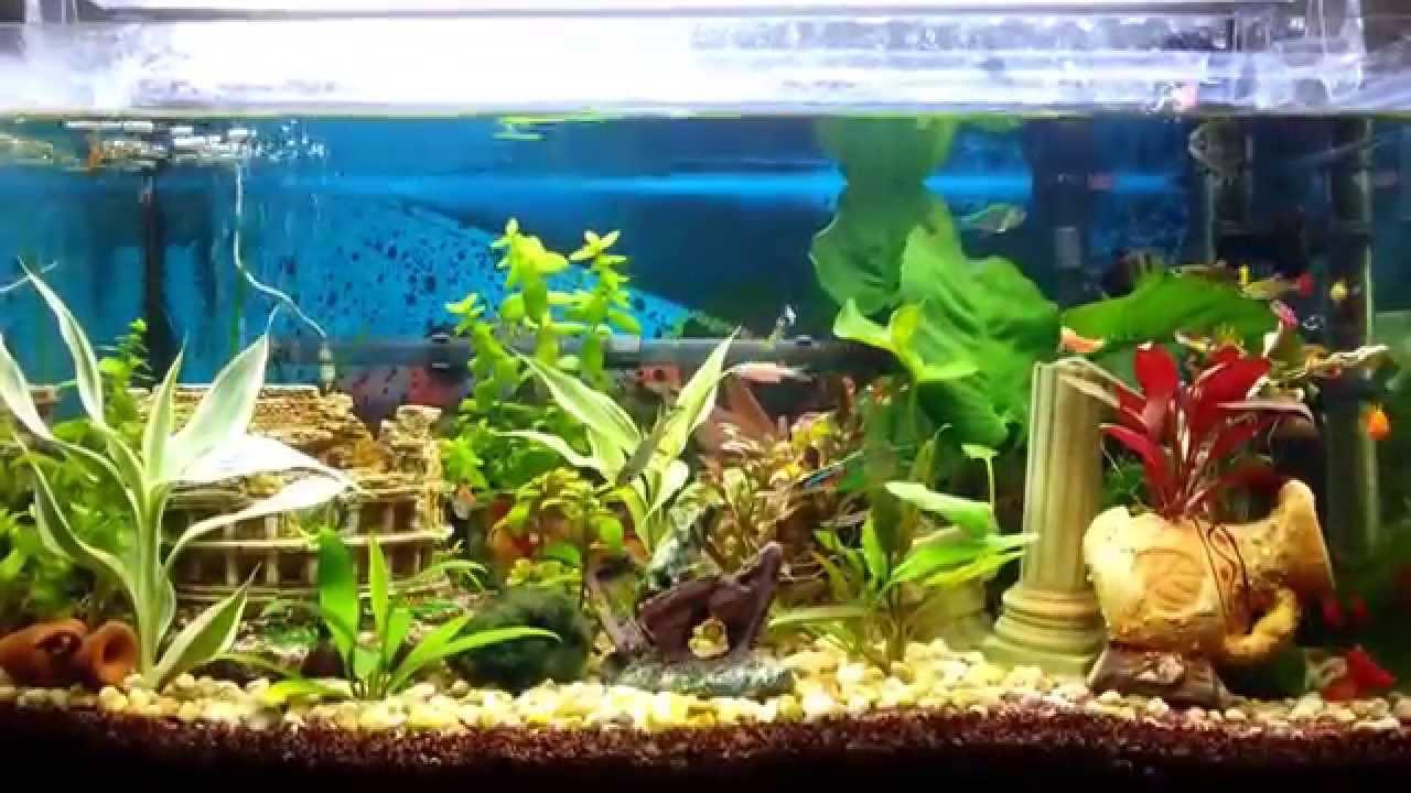 Il mio primo acquario di casa patea youtube for Acquario in casa