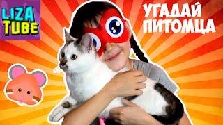 Кот, кошка, хомячок или крыска 🐹🐭😸 ВЫЗОВ Угадай питомца на канале 🌸 Lizatube