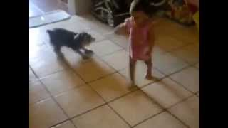 Baby Playing With Cute Puppy Schnauzer Tug A War!!!