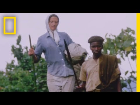 Dian Fossey: Secrets in the Mist | National Geographic