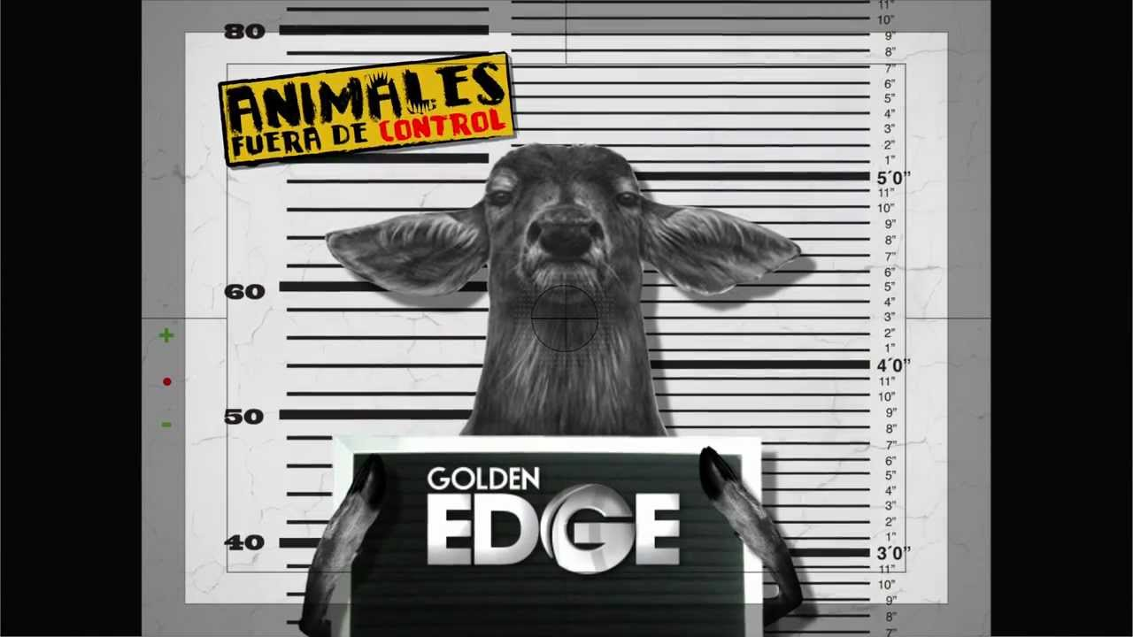 Animales fuera de control golden edge youtube for Fuera de control dmax