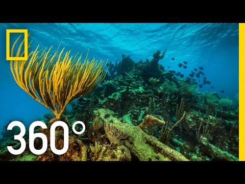 Thumbnail: 360° Underwater National Park | National Geographic
