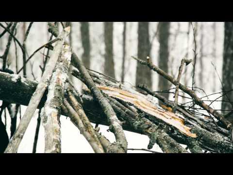 ГОЛЫЕ на ПРИРОДЕ девушки и женщины Эротика в лесу
