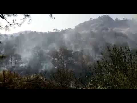 Fire broke out in Kalidhar forest area, Fire brigade team done wonderful job,
