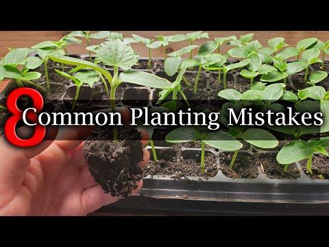 8 Common Planting Mistakes To Avoid For Beginner Gardeners