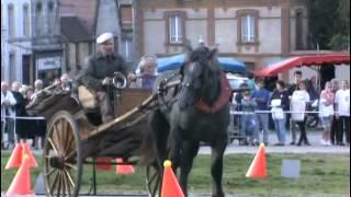 Les chevaux de trait - le percheron