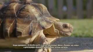 Музыка из рекламы:  Билайн 2014 с черепахой,Черепаха на скейте(, 2014-07-18T14:19:38.000Z)