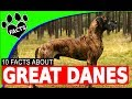 Dogs 101: Great Dane  Fun Facts About #GreatDane #Dog - Animal Facts