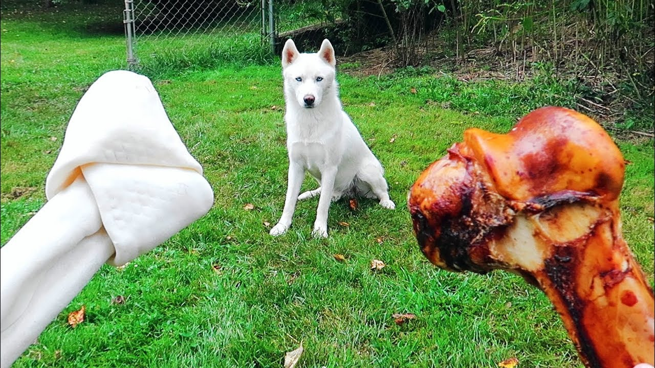 Do Dogs Like Bones or Rawhide Bones?