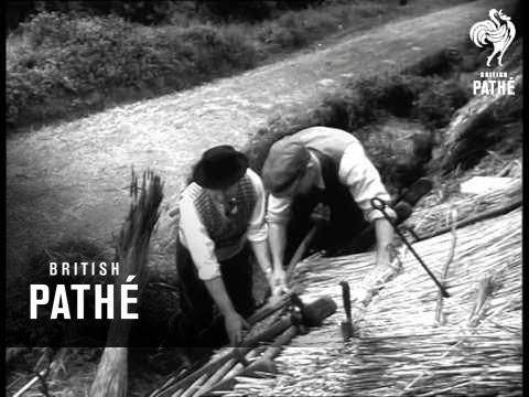 Thatching (1954)