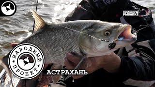 Жерех. Выбор приманок. Рыбалка в Астрахани   Народный проект
