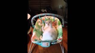 「うちの猫は、赤ちゃんよりもベビーベッドを楽しむ」(動画)