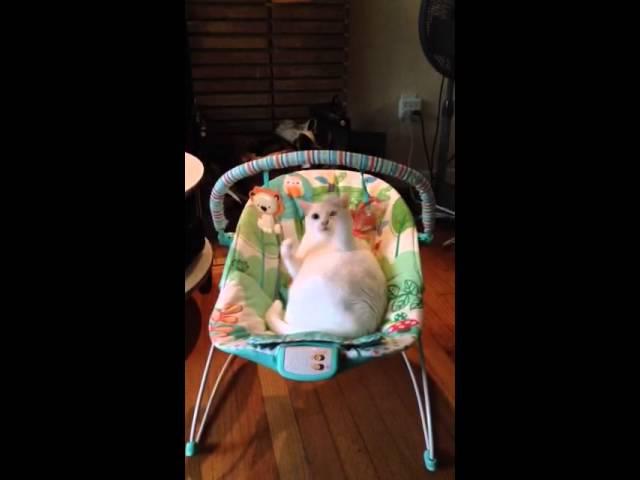 Cat on baby swing playing gato en hamaca de bebé jugando