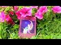 Oracle Card Reading 27th July fairy Luna Eclipse Aquarius tarot
