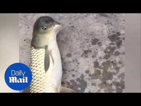 Bizarre Fish With Bird-shaped Head Caught In China