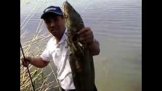 Snakehead fishing in Kazakhstan