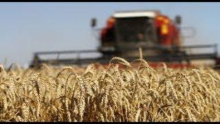 На Северном Кавказе хорошие валовые сборы зерновых - Аркадий Злочевский