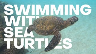 The Detourist Guide To Travel - Maui | Episode 5 - Maui's Best Beach + Swimming With Sea Turtles