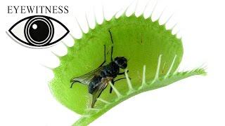 EYEWITNESS | Plant
