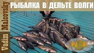 Рыбалка в низовьях Волги 2016.  База Царь-рыба в дельте Волги.  Мальковский Вадим