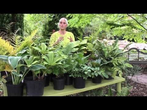 Perfect plants for shade