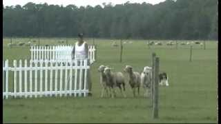 "Buttercups ""CHARM"" assa2012-SAT-HIT run.avi"