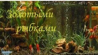 МакSим - Золотыми Рыбками