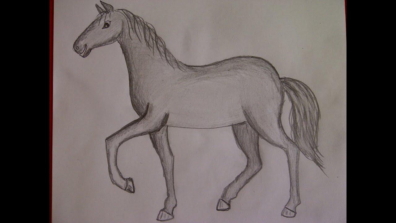 Cmo dibujar un caballo Como hacer un dibujo para principiantes