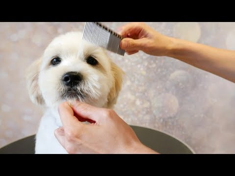 Grooming Guide How To Groom A Puppy 11 Youtube