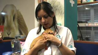 Cuidados de las mascotas: Tip +KOTA La llegada del cachorro a casa.