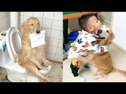 Try Not To be Surprised  Cute Funny and Smart Dogs Compilation (2020)