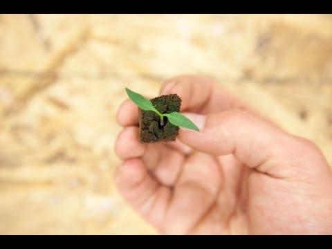 Mold or Algae Growing on Top Soil | Seedling Troubleshooting