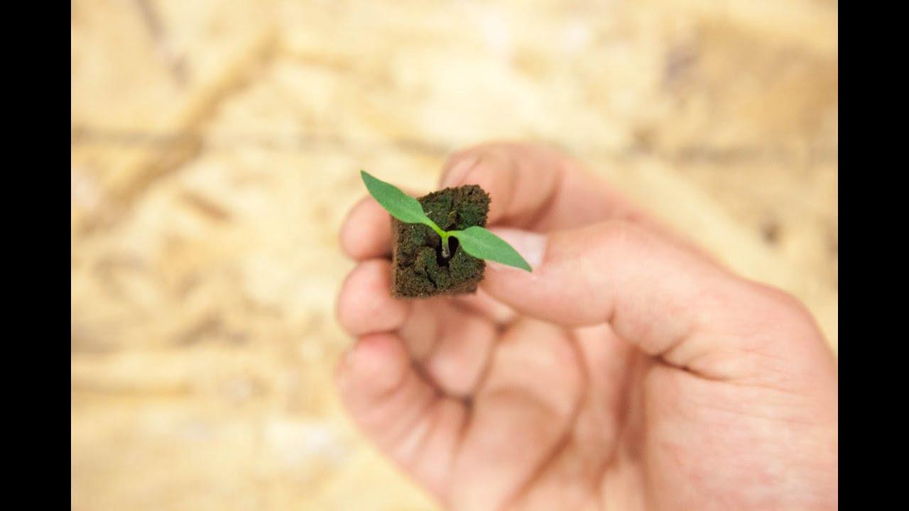 Mold or Algae Growing on Top Soil   Seedling Troubleshooting