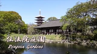 浅草伝法院庭園 Denpoin Gardens in Asakusa