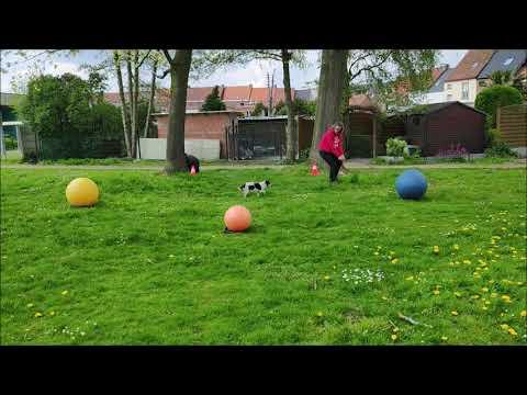 TRBG3 Round 3 Level I.  Spirou + Kristel Osselaer - Belgium