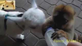 Забавное поведение животных