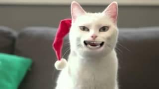 !Кот поёт песню
